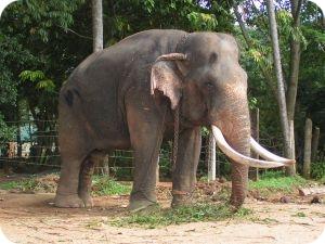 Srí lanka dovolená již od 17 140 Kč